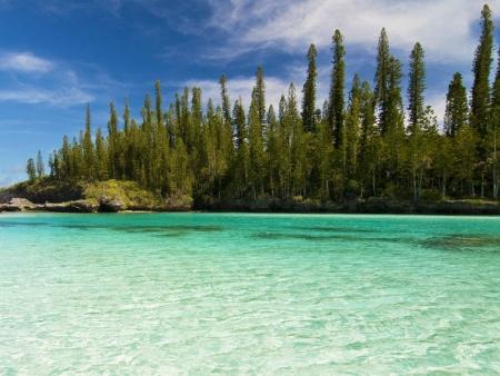 … de la forêt aux lagons