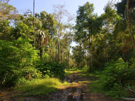 Découverte du Parc National Amboro