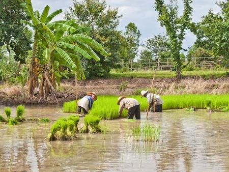 Maison d'hôtes au cœur des rizières