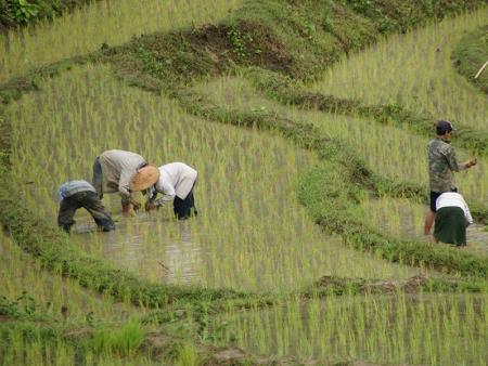 Au vert à Muang La