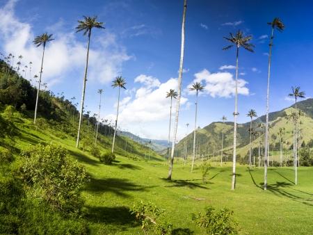 La Vallée de Cocora
