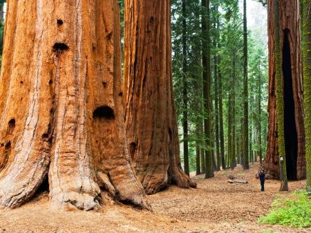 Route vers le célèbre Sequoia National Park et ses arbres géants