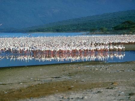 Une demi-journée au Lac Bogoria