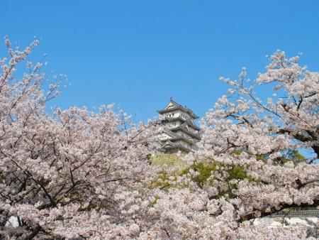 Himeji Medieval Fortress