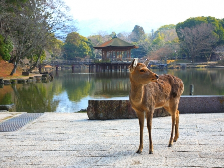 Wander around Nara Park, where thousands of deer roam freely