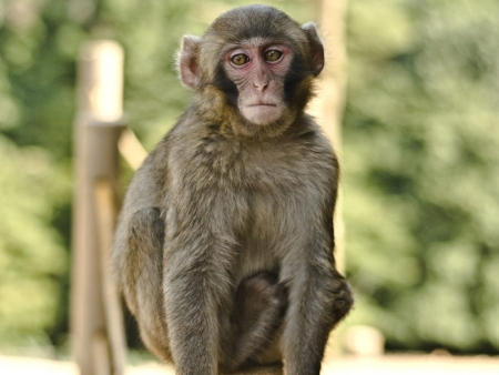 Climb up Iwatayama mountain in the Arashiyama district and observe monkeys.