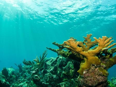 Journée de plongée à Mexico Rocks