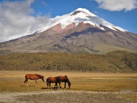 Parc National de Cotopaxi et le splendide volcan Quilotoa