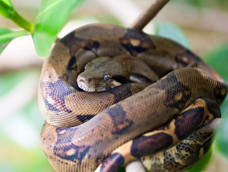 Monteverde, le poumon vert du Costa Rica !