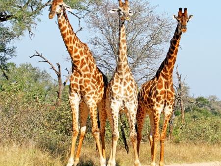 Journées entières de safari ( 134 km)