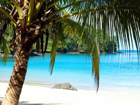 Idylle sur les plages du Pacifique !