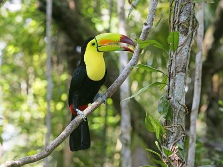 Vers le magnifique Belize !