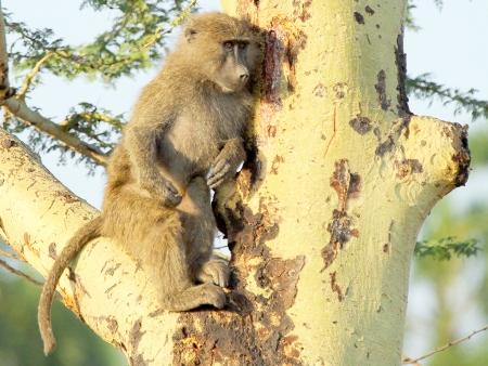 La découverte du parc Manyara