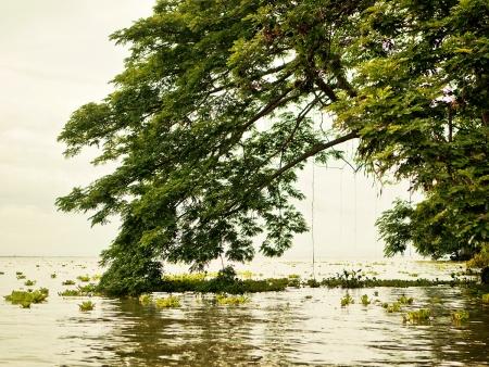 Îlots perdus dans l'immense lac Nicaragua