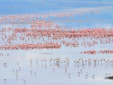 Faune et flore du Lac Manyara