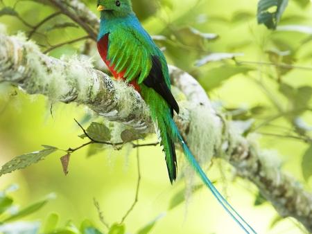 Sur la piste du Quetzal…
